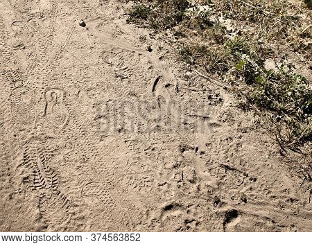 Rattlesnake Track Alongside Tennis Shoe Tracks In Dirt Trail In California.