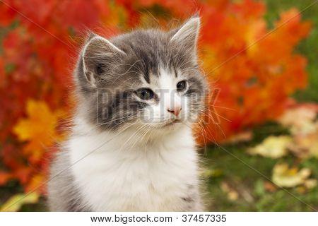 Kitten In The Fall