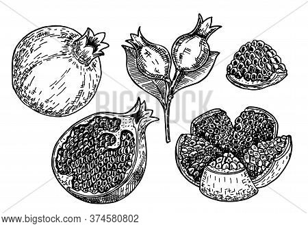 Hand Drawn Sketch Style Pomegranates Set. Pomegranates With Seeds And Leaves. Sketch Style Vector Il