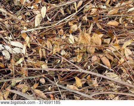Closeup Shot Of Sticks Of Kindling Wood