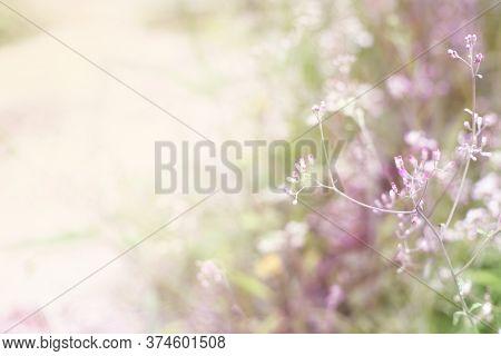 Blur Grass Flower As Nature Background