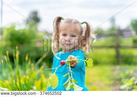 Little Girl Holds Out Her Hand With Radish, Focus On Radish
