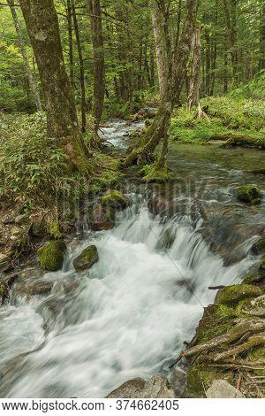 Forest Creek, Lush Green Woodland In Kamikochi, Nagano, Japan