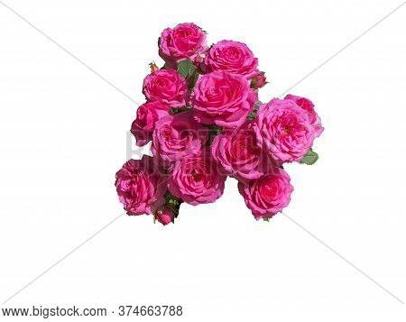 Bouquet Of Pink Roses Isolated On White Background. Copy Space. Postcard Mock-up. Mother's Day, Anni