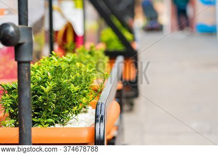 Closeup Of Street Flowers And Sidewalk On A Street In Puerto De La Cruz, Tenerife, Canary Islands, S