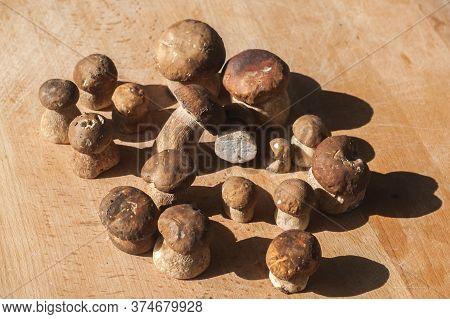 Fresh Cut Boletus Edulis Mushrooms Closeup On Wooden Board Background