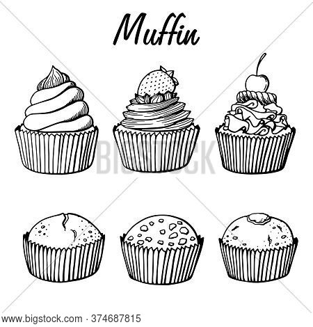 Muffin Set Simple Illustration . Cupcake Collection With Different Flavors . Outline Hand Drawn 6 Mu