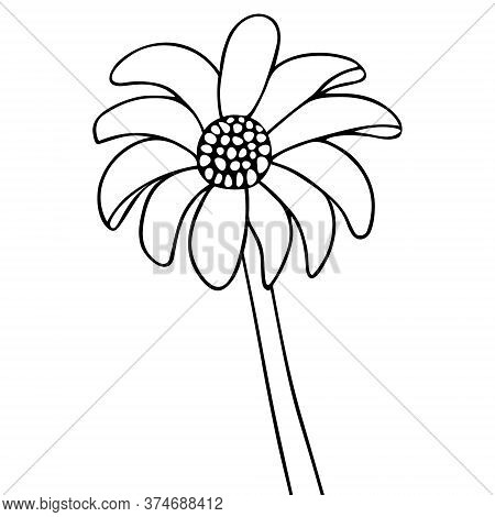 Gerber. Flower Sketch. Vector Illustration. Outline On An Isolated White Background. Doodle Style. C