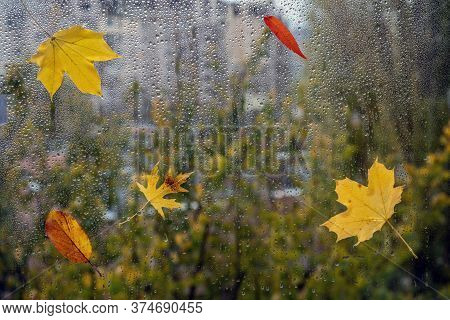Raindrops On A Window Pane With Colorful Leaves. Selective Focus.