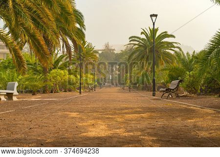 Promenade Alley In A Public Park Covered With Sand Storm, Calima. Tenerife, Spain