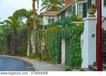 Street With Palms And Buildings Covered With Flowers, Puerto De La Cruz, Tenerife, Spain