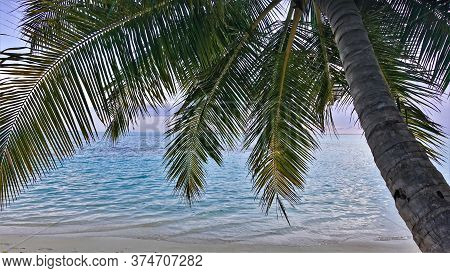 Palm Tree Bent Over The Ocean. Through The Green Leaves, The White Sand Of The Beach, Calm Aquamarin