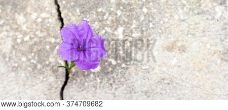 Purple flower growing from crack in the rode, hope and new growth in the middle of crisis banner, new life