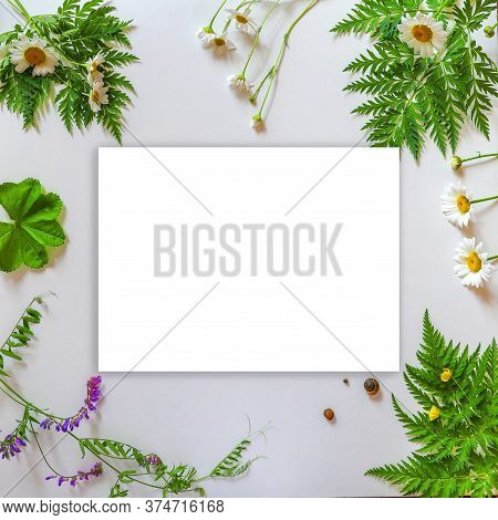 Summer Mockup. A White Sheet Of Paper Next To Wild Plants And Flowers Daisies And Buttercups Three S
