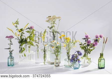 Wild Field Herbs In Bottles Of Different Shapes On A White-gray Background As A Decoration. Card