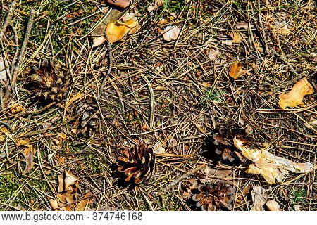 Natural Background With Pine, Needles, Cones, Old Leaves And Bark. Texture Of Pine Needles