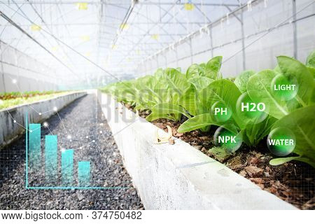 Organic Vegetable Farm Using Modern Technology. With Graphics Stick Showing Growth And Compound Form