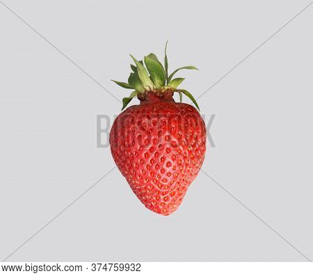 Red Ripened Strawberries On A Gray Isolated Background.