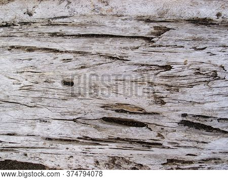 Weathered Wooden Texture Closeup. Raw Timber With Grungy Cracks. Natural Surface For Vintage Backgro