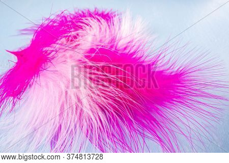 Beautiful Abstract Colorful Black And Purple Feathers On White Background And Soft White Pink Feathe