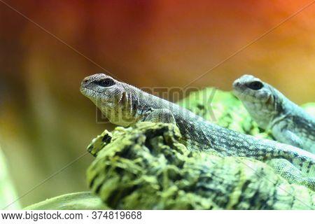 Beautiful Macro Shot Of A Small Lizard