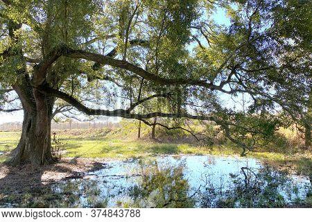 A Large Tree Near A Pond Reflection On A Sunny Day