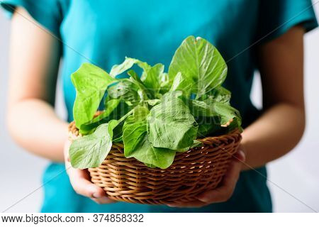 Green Thai Spinach Leaf Or Edible Amaranth (asian Plant) In A Basket Holding By Woman Hand, Organic