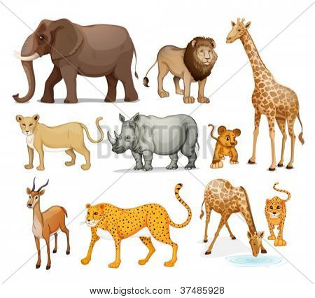 illustration of Animals in on a white background