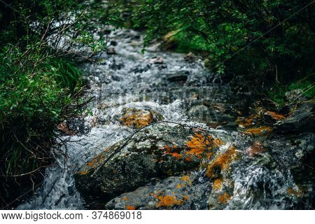 Beautiful Mountain Creek With Rich Flora In Forest. Big Stone With Mosses And Lichens In Shiny Water
