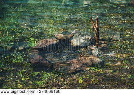 Flooded Campfire Among Greenery In Calm Clear Water. Meditative Ripple On Transparent Water After Fl