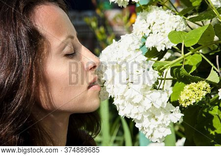 Beautiful Woman Smell Hydrangea Flowers. White Hydrangea Blossom. Spring Blooming Garden. Beauty And
