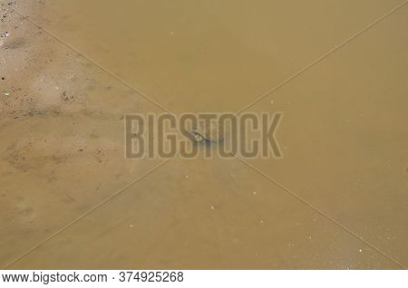 Turtle In Muddy Lake Or Pond Water