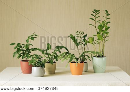 Several Green Houseplants In Multicolored Ceramic Pots Stand On A White Table Against A Brown Backgr
