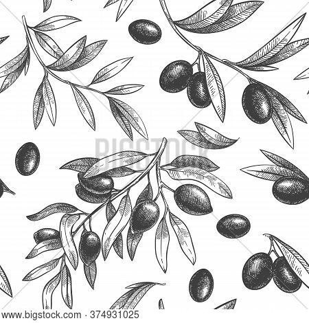 Seamless Black Olive Pattern. Greek Olives On Branches With Leaves, Hand Drawn Sketch Vector Illustr