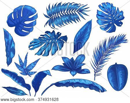 Blue Tropical Leaves. Exotic Palm Tree Leaf, Botanical Monstera And Floral Isolated Vector Illustrat