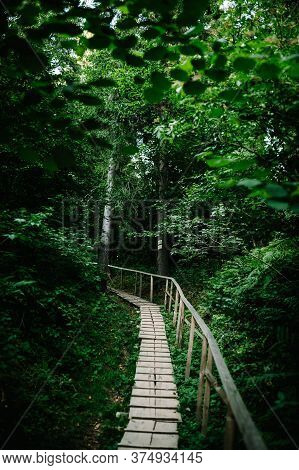 The Wooden Path In The Forest Leads. Journey Ahead. Quiet Lane. Wood Plank Walkway Through Woods.