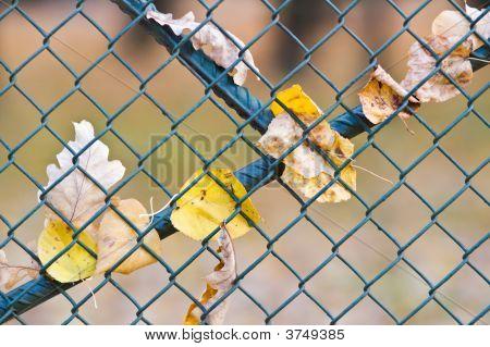 Metal Net Fence