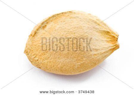 Plum Stone