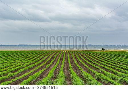 Field Of Green Lines Towards The Blue Ocean. Dark Clouds. The Picture Was Taken Near Loddekopinge In