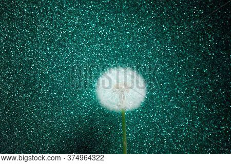 dandelion flower on emerald glitter background