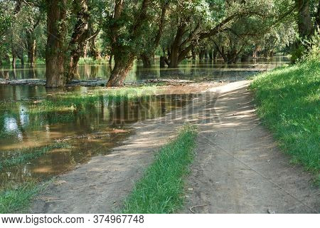 flood in the forest, dirt road, river with high water level, flooding, nature in summer on a bright day