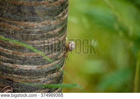 A Closeup Shot Of A Snail Crawling On A Tree Trunk