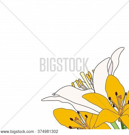 Hand Drawn Lilly Flower Isolated On White.  Illustration