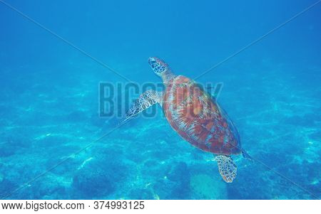 Snorkeling With Sea Turtle. Aquatic Animal Underwater Photo. Tropical Island Snorkeling And Diving B
