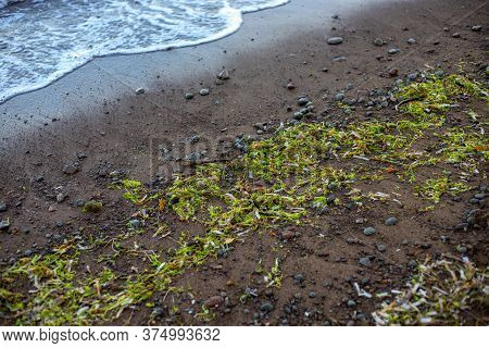 Green Seagrass On Brown Beach Sand. Wild Beach Natural Recovery During Pandemic Quarantine. Seaside