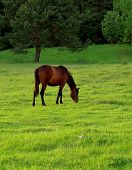 horse in a morning ** Note: Slight blurriness, best at smaller sizes poster