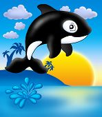 Killer whale with sunset on blue sky- color illustration. poster