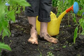 Watering The Garden. Dirty Male Legs And Watering Can Closeup. A Man Stands Barefoot On A Path In Th