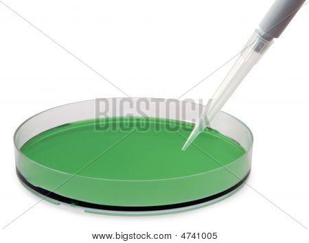 Petri And Pipette