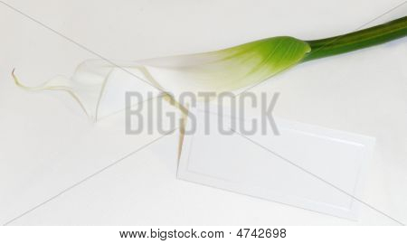 Calla Lily With Blank Card